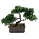 Feng Shui Bonsai